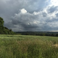 Summer approaches at Lockley Farm